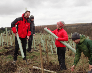 Tree planting for increased resilience