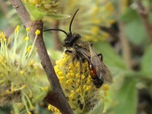 A photo of a Perkins Mining Bee