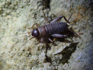 A photo of a scaly bush cricket