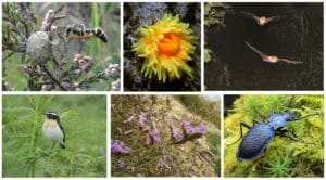 A collection of the Devon Special Species