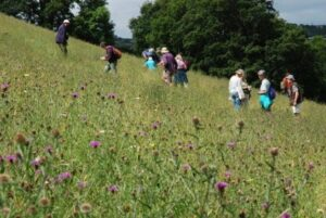 People in a meadow looking at the purple flowers